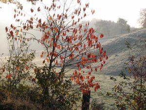 Landschaftsfotografie Herbstbild Bunter und Roter Herbst