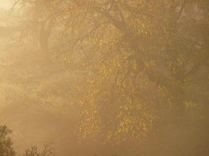 Landschaftsfotografie Herbstbild Goldener Herbst