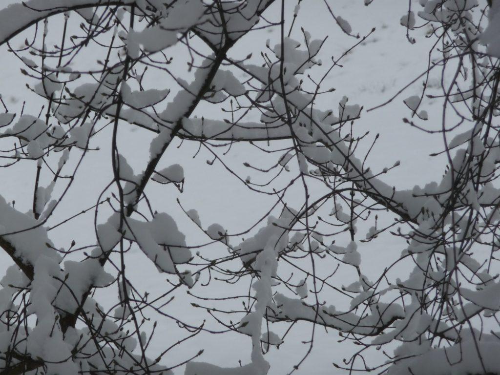 Postkarte mit schneebehangenen Ästen
