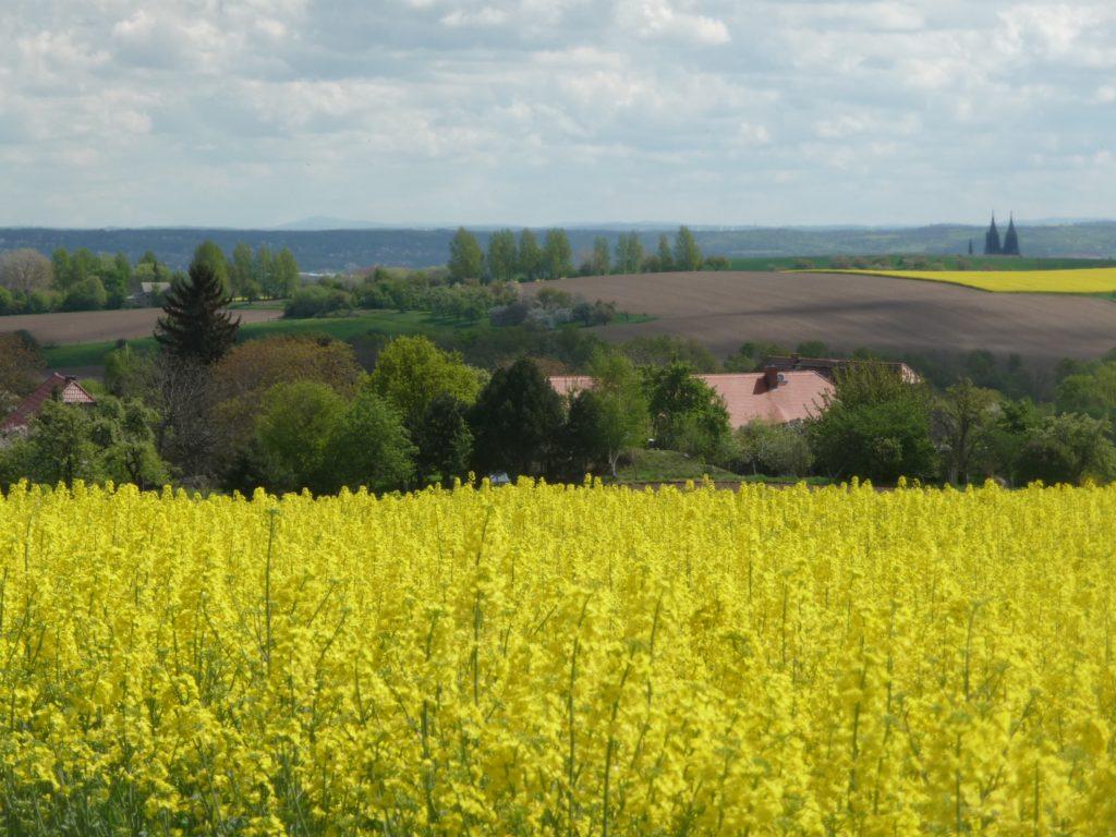 Ausblick auf Jesseritz vom blühenden Rapsfeld